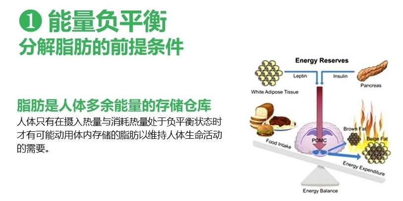 科学减脂必须满足的5大条件!变啦减脂为什么必须有营养餐?